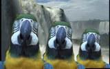 music video : Hexstatic - Perfect Bird