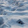 Alaska - The Mesozoic Era (Arctic Music AMLPCD01, 2010, CD)